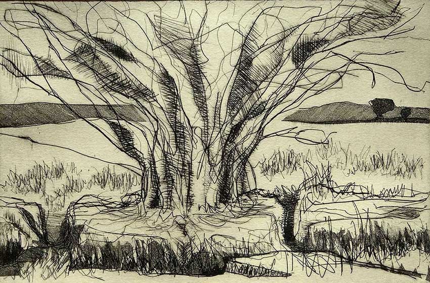 Willow 5 - 2016 - intaglio and drypoint - edition of 6