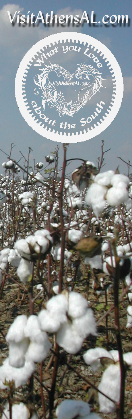 Cotton-Field-What-You-Love.jpg