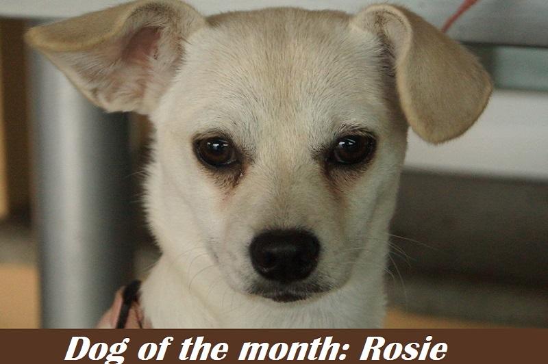 Dog-of-the-month-Rosie.jpg