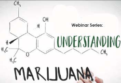 Marijuana-Series.jpg