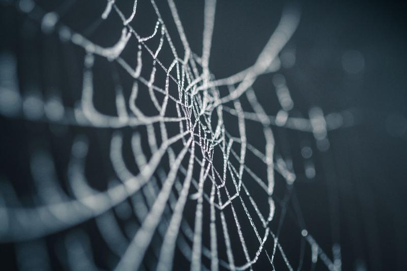 spider-web-sm.jpg