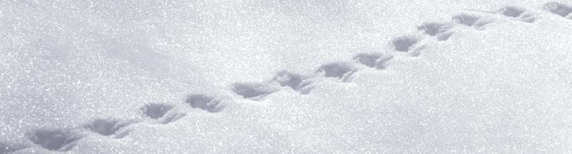 tracks-banner.jpg