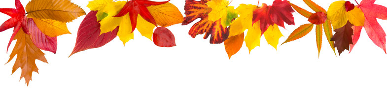 autumn-leaves-border-6778266.jpg