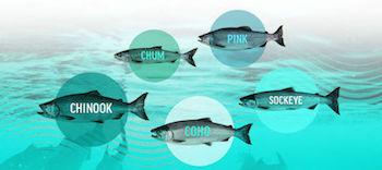 UI-salmonpics.jpg