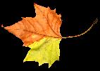 foliage-1098898-960-720.png