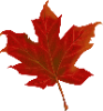 leaf-984998-960-720.png