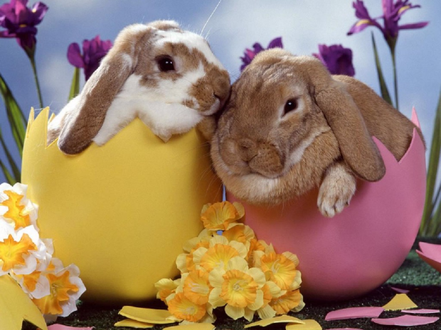 adorable-easter-bunnies-1024x768.jpg