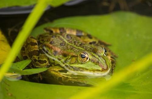 frog-1807648-340.jpg
