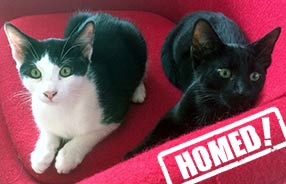 Pair of cats homed through Cat Chat