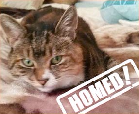molly cat homed through Cat Chat
