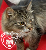 tabby cat needs a home wales