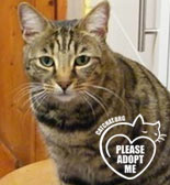 rescue cat needs a homes west wales