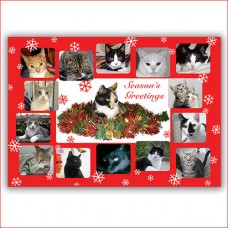 cat chat charity christmas card