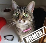ronnie cat homed purrs cat rescue hornchurch