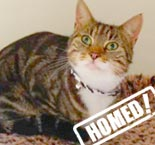 frankie cat homed purrs cat rescue hornchurch
