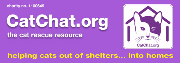 cat chat charity newsletter header