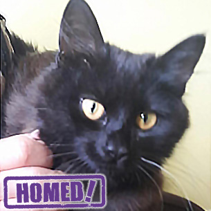 black cat and kittens homed doncaster