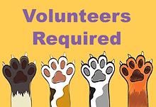 Cat Chat Volunteer Team / Opportunities