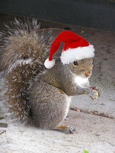 Squirrel-Christmas-2.jpg