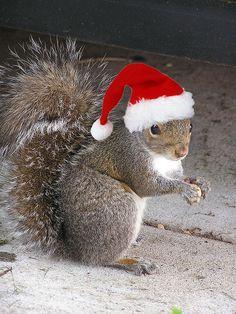 Squirrel-Christmas.jpg