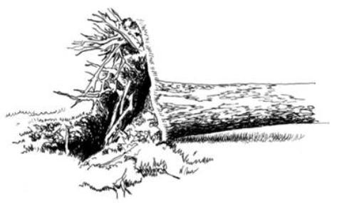 root-wad.jpg